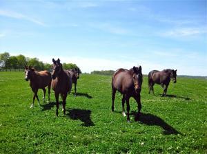 horses... quite a few